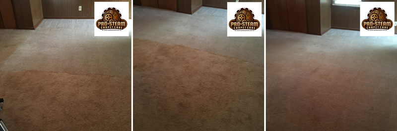 Gainesville-Carpet-Cleaning